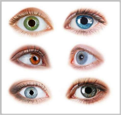 eye color rarity rarest eye colors actforlibraries org