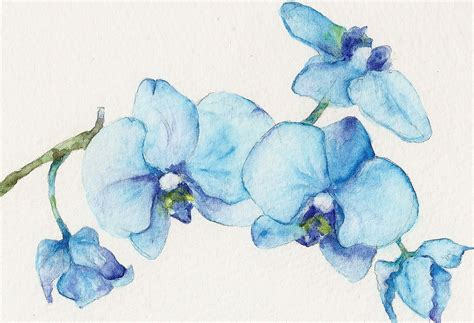 blue orchids one original watercolor painting