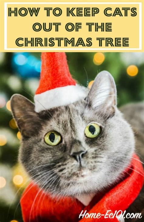 best to keep cats off the xmas tree how to keep cats out of the tree home ec 101