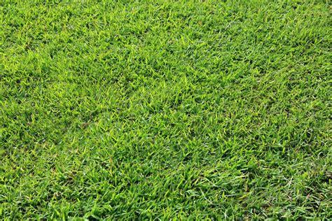 wallpaper bunga rumput gambar menanam bidang halaman rumput padang rumput