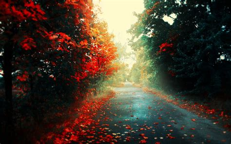 background hd leaves road forest landscape fall wallpapers hd