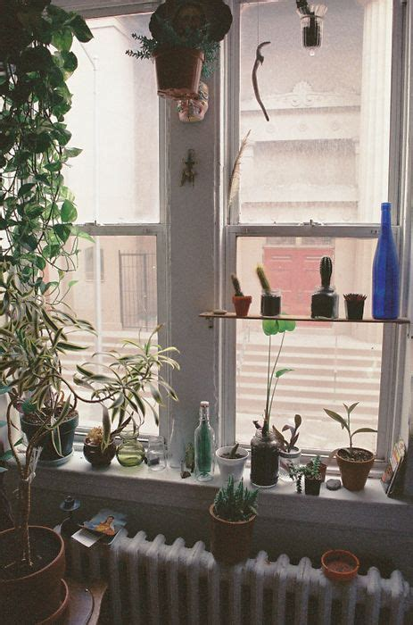 Indoor Window Sill Plant Shelf 1000 Images About House Plants That Are Pet Friendly And