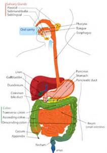 yellow bowel movement in diarrhea stomach problems and