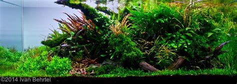 Cryptocoryne Aquascape by 2014 Aga Aquascaping Contest 173