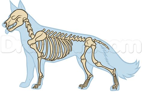 dog anatomy drawing step by step pets animals free