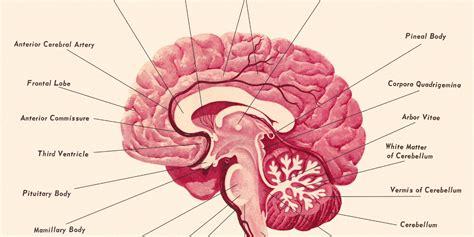 for the brain cracking the brain s genetic code huffpost