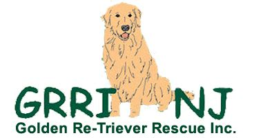 new jersey golden retriever rescue hale pet door golden retriever rescue organizations