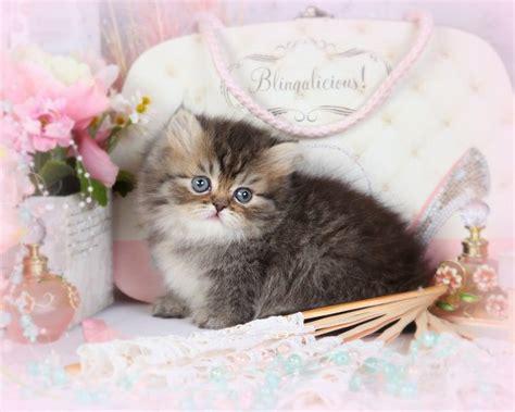 rug hugger cats gold locket teacup rug hugger tiny kittens tiny kittens rug hugger kittens rug