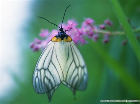 of a butterfly butterfly wallpaper butterflies wallpaper 7451006 fanpop
