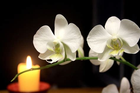 black and white orchid wallpaper white orchid wallpapers wallpaper cave