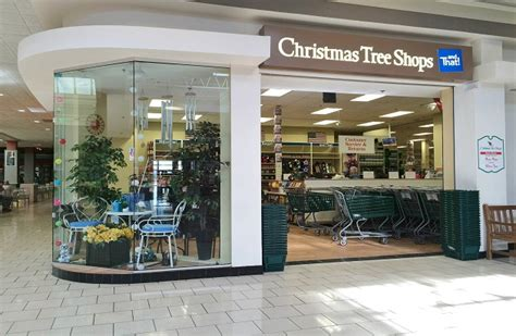 Furniture Stores Watertown Ny by Tree Shop Watertown 28 Images Ficus Tree East End