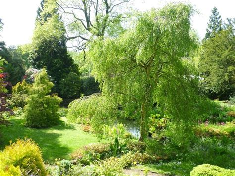 fletcher moss botanical gardens guide to manchester outdoors travel guide on tripadvisor