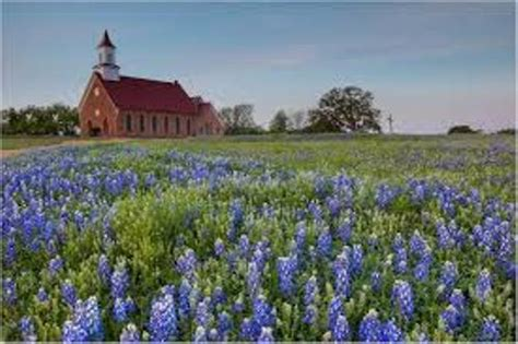 10 facts about bluebonnets fact file