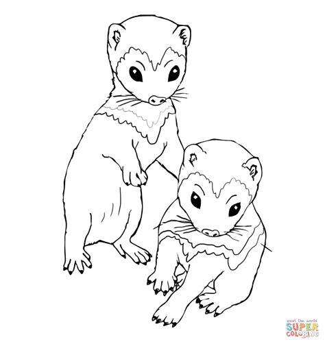 coloring book kits ferret kits coloring coloring