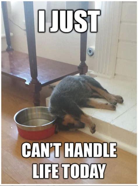 super relatable dog memes     laugh