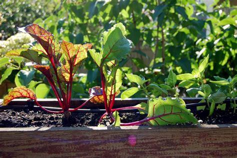 How To Prepare For A Fall Vegetable Garden Fall Vegetable Garden Plans