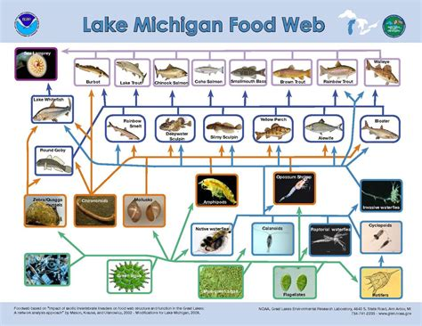 Lake Michigan Food Web Diagram original file 1 650 215 1 275 pixels file size 690 kb