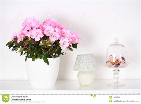 Flower Interior by Flowers In Interior Stock Photo Image Of Plants Plant