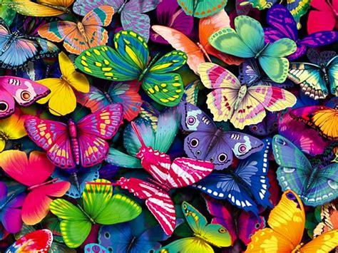 imagenes de dos mariposas juntas madre mia del amor hermoso so 241 ar con mariposas