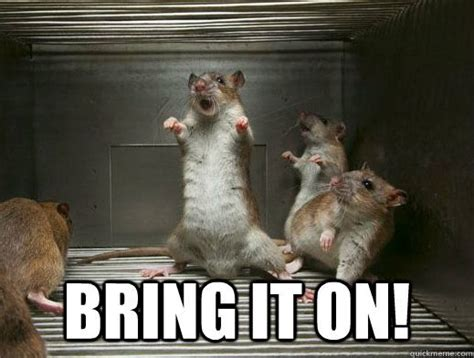 Rodent Meme - 17 best rat memes images on pinterest rats pet rats and
