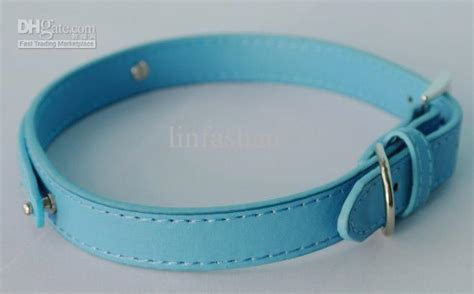 light blue dog collar helping animal shelters the ellen degeneres way 171 on the