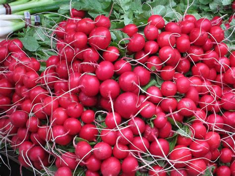 radishes planting growing and harvesting auntie