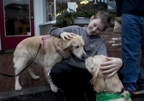 what is a comfort dog comfort dogs helping ease pain of sandy hook tragedy ny