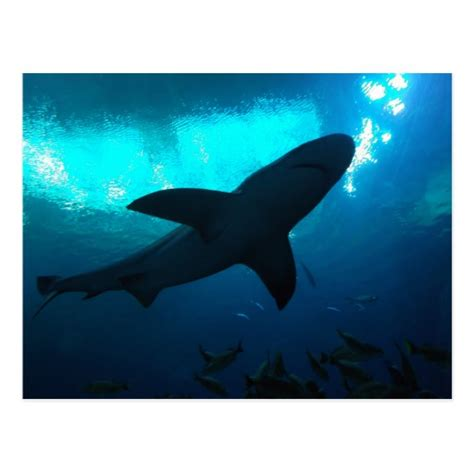 Georgia Aquarium Gift Card - shark at the georgia aquarium postcard zazzle