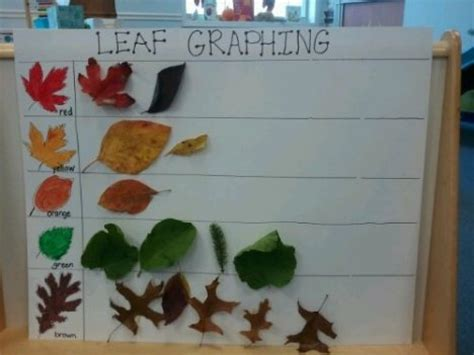 printable leaves for sorting fall into fun with leaf activities creative preschool