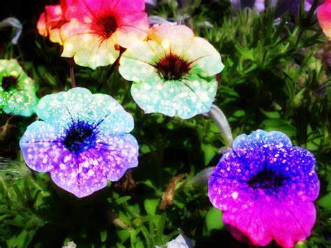 glitter wallpapers of flowers rainbow glitter flowers by lt arts on deviantart