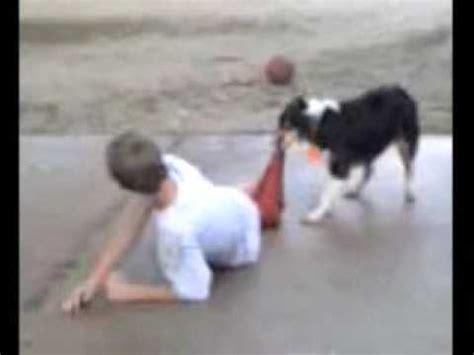 boy vs dogs pull s 2 doovi