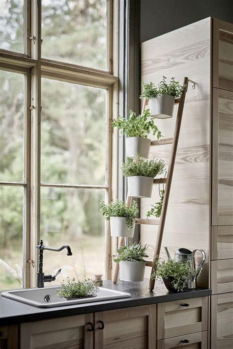 decorar con plantas el baño ideas para decorar tu cocina con plantas amor s 243 lo
