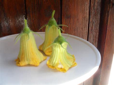 fiori di zucca o zucchina altro insalata fiori di zucca o zucchina ripieni