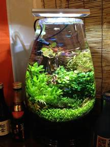 Vase With Led Lights 156 Best Images About Planted Nano Aquariums On Pinterest