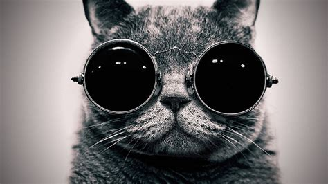 cool wallpaper ever cool cat hd wallpapers