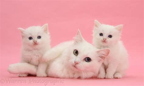 Cats Pink 78 best images about cats in pink on cats
