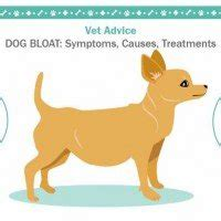 puppy bloat symptoms bloat symptoms causes treatments dogalize