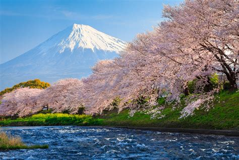 wallpaper 4k japan wallpaper fuji 4k hd wallpaper sakura river japan