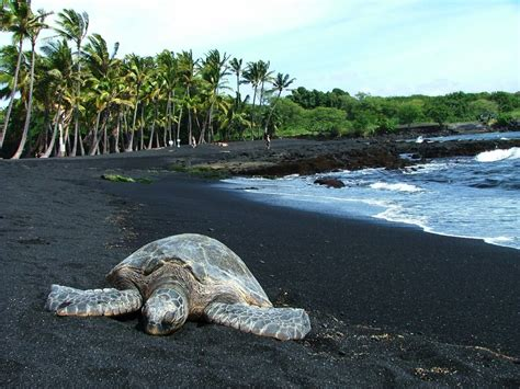 picture photo black sand beach at punaluu big island punalu u black sand beach aloha valley