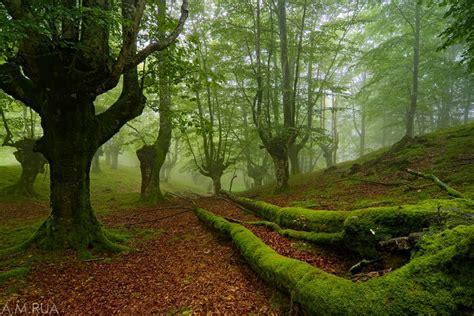 imagenes de bosques verdes el bosque verde galer 237 as fotonatura org