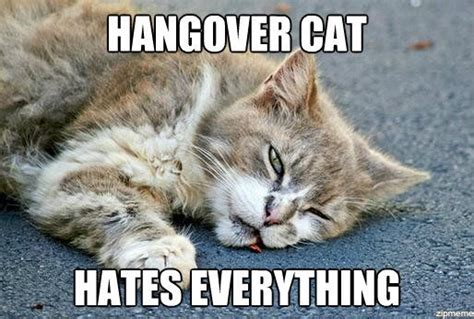 Hangover Meme - hangover cat hates everything weknowmemes