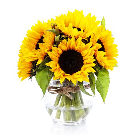 girasole in vaso vendita girasoli in vaso fiorionline