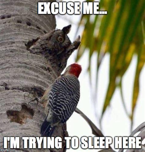 Trying To Sleep Meme - owl imgflip