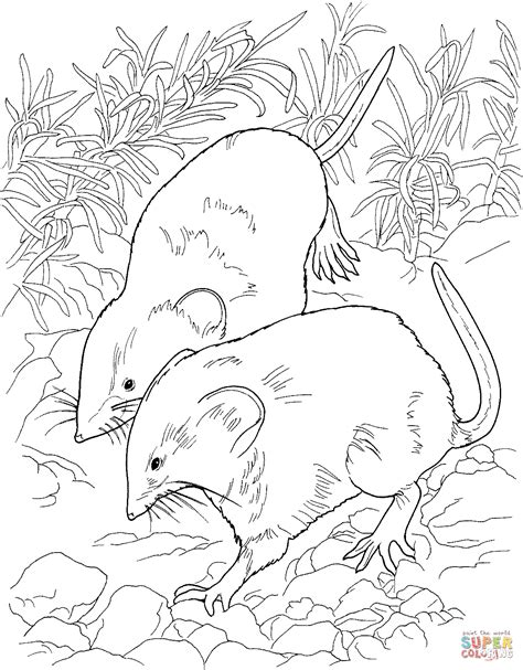 kangaroo rat coloring pages 44 rat coloring pages kangaroo rat coloring page