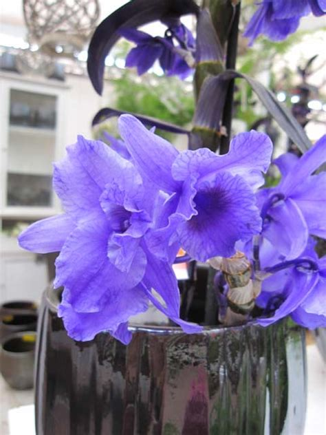 imagenes de uñas q estan de moda estan de moda las orquideas pintadas que pena