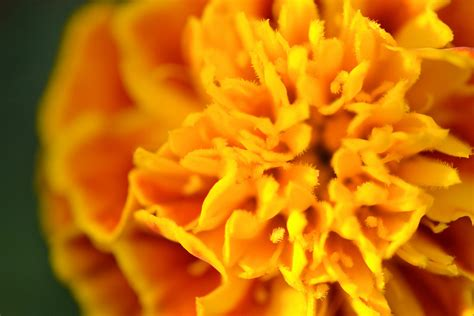 marigold paint color exploration paint it marigold spectacular design