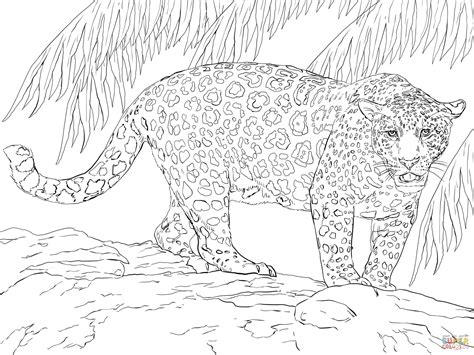 coloring pages of jaguar great jaguar coloring page free printable coloring pages