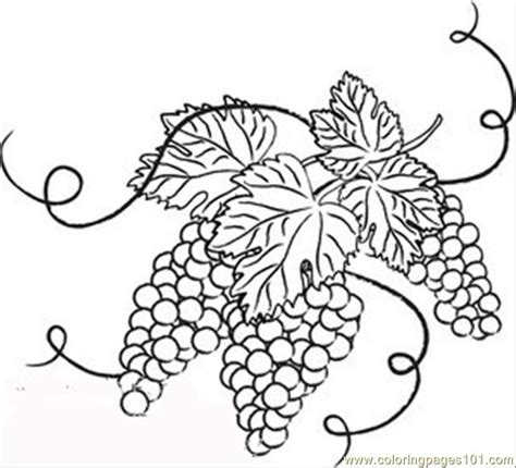 grape leaves coloring pages coloring pages and white grapes with leaves food fruits