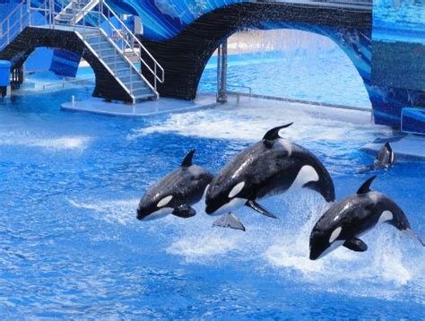 Imagenes Seaworld Orlando | seaworld orlando bewertungen und fotos lohnt es sich