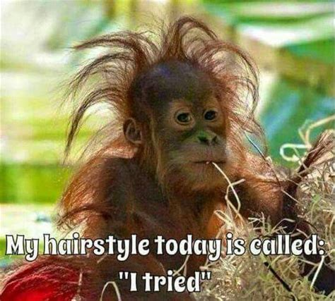 bad hair day aminal memes funny animal pictures funny animals funny quotes